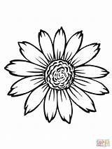 Sunflower Head Coloring Pages Flowering Printable sketch template