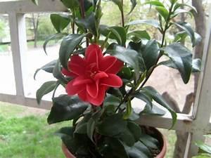 Pflegeleichte Zimmerpflanzen Mit Blüten : gr ne zimmerpflanzen bl hende pflegeleichte topfpflanzen ~ Sanjose-hotels-ca.com Haus und Dekorationen