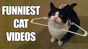*Try Not To Lau... Funny Cat Videos