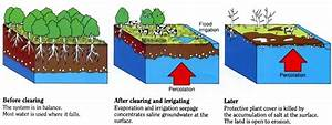 Irrigation Salinity