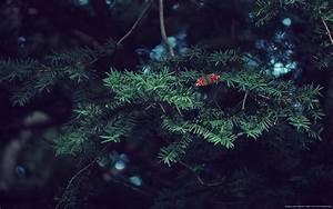 Nature - animals, trees, grass, flowers on minimalist ...