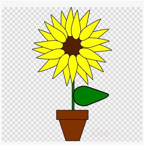 gambar bunga matahari dalam pot kartun