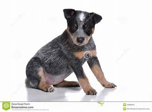 Cute Puppy Stock Photography - Image: 34986262
