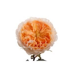 ordering flowers online golden yellow apricot garden beatrice garden