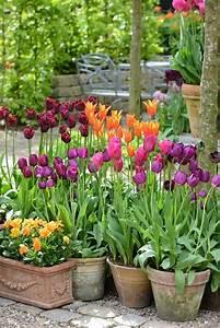 Tulpen Im Garten : 25 beauty tulips arrangement tips for your home garden ~ A.2002-acura-tl-radio.info Haus und Dekorationen