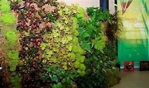 Mur Végétal Extérieur : photos murs vegetaux et treillages page 1 ~ Louise-bijoux.com Idées de Décoration
