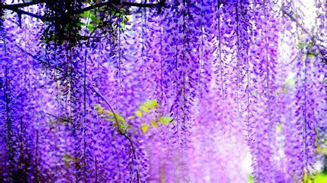 Purple Flower Hd Wallpapers