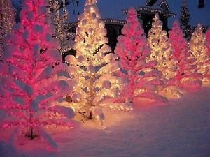 Christmas snow winter xmas Christmas tree lights cold tree ...