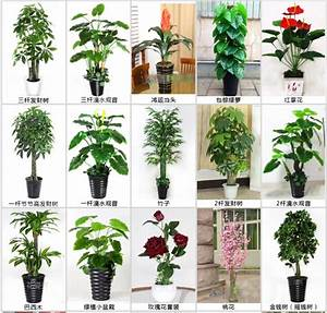 Indoor Types Of Evergreen Ornamental Plants Artificial