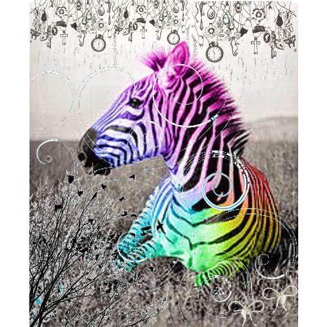 baby zebra wallpaper wallpapersafari
