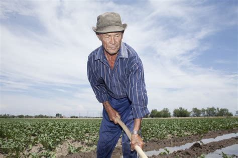 Image Gallery old male farmer