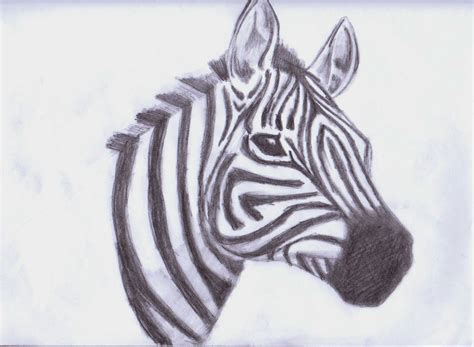 zebra drawing animals fan art  fanpop