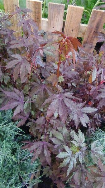 10 พรรณไม้ ที่ไม่ได้พบบ่อย แต่ปลูกได้ในบ้าน!   การปลูกพืช