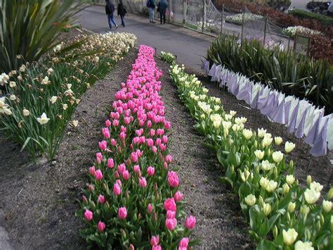 bulb gardens information on planting bulbs in your flower garden