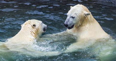 baltimore md maryland zoo