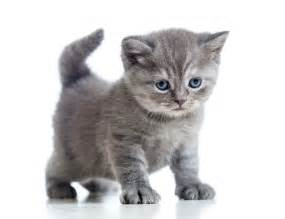 kitty cat pictures arrested in sick kitten toss new york post
