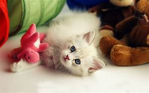 Cute Wallpapers HD Wallpaper Cave