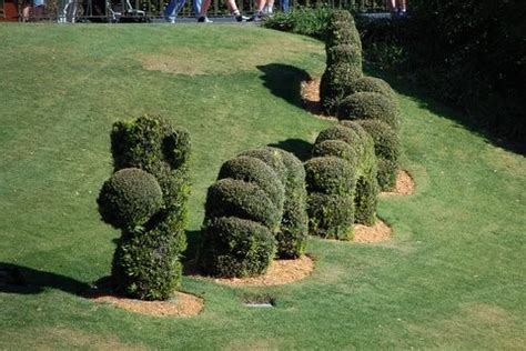 Funny Topiary