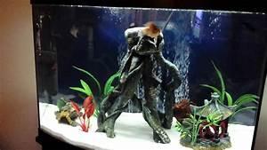 My 36 Gallon Fish Tank Freshwater