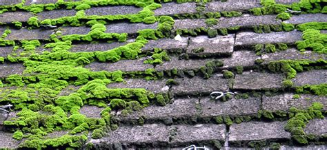 How Do I Stop Moss Growing On Roof Shingles And Roof Tiles?