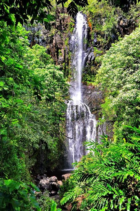 The road to hana reveals stunning waterfalls all along the way, enveloped by lush tropical rainforest with a surprising number of fantastic photo it has always been one of the richest throughout hawaii's islands regarding species variety and natural resources. Scenic Waterfall. Maui, Hawaii along the Road to Hana , # ...