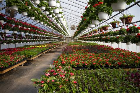 what is horticultural horticulture d 233 finition m 233 tiers formation ooreka