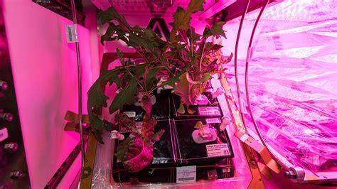 การปลูกพืชบนสถานีอวกาศนานาชาติสำเร็จ (คลิป)