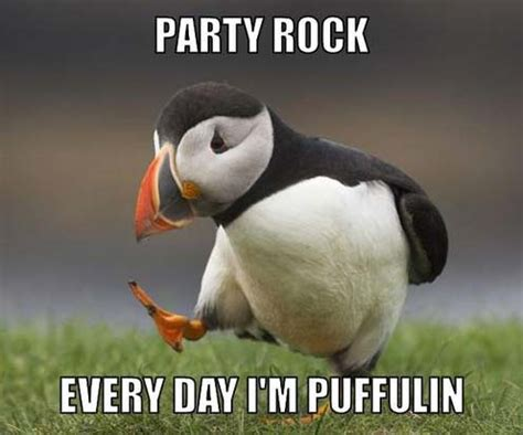 Puffin Meme - party puffin