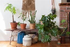 7 Pflegeleichte Zimmerpflanzen Die Wenig Licht Brauchen