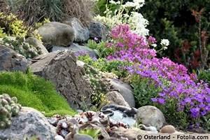 Steingarten Bilder Beispiele : steingarten anlegen und pflegen gartentipps ~ Whattoseeinmadrid.com Haus und Dekorationen