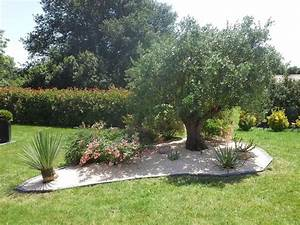 Planter Un Olivier En Pleine Terre : plantation d un olivier en pleine terre 25 cultures le ~ Farleysfitness.com Idées de Décoration