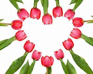 Herz Bilder Kostenlos Downloaden : valentinstag herz aus tulpen lizenzfreie fotos bilder kostenlos herunterladen ohne anmeldung ~ Eleganceandgraceweddings.com Haus und Dekorationen