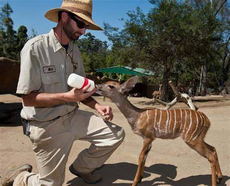 keeper zoo san diego faq jobs sandiegozoo