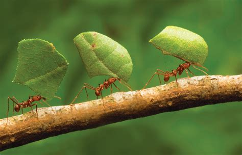 Ant architects: How do ants construct their nests? – How ...