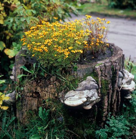tree stump planter 19 blazing tree stump planter ideas that ll impress you