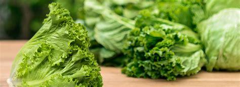 Green Leaf Lettuce | Dole.com