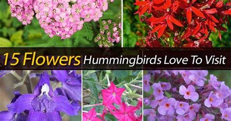 15 flowers hummingbirds love to visit