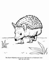 Hedgehog Coloring Pages Drawing Animal Drawings Sketches Animals Printable Colouring Hedgehogs Sheets Honkingdonkey Identification Adult Dog Puppy Wild Visit sketch template