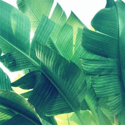Plants Tropical Leaves Leave Flowers Garden Fruits