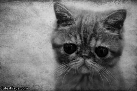 mata bulat comel  gambar kucing  comel