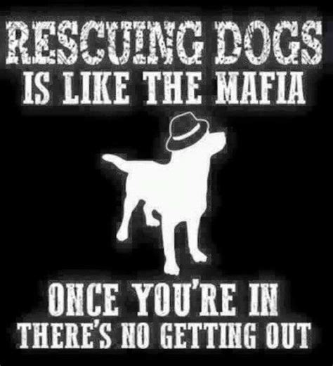 animal rescue quotes sayings