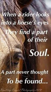 Get your FREE o... Free Horses Quotes