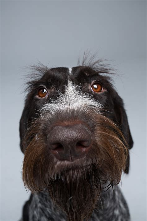 custom dog portraits showcase  array  personality
