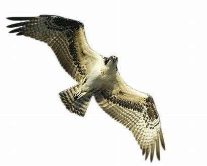Osprey Clipground
