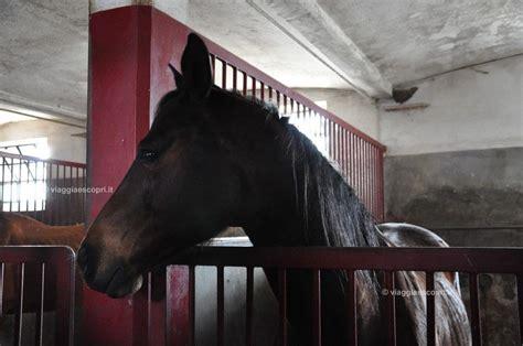 la mandria candelo tenuta la mandria a candelo tra cavalli e natura