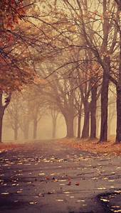 photography tumblr landscape wallpaper nature paris autumn ...