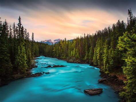 beautiful mountain stream waterfall rocks  green pine