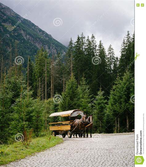 carrozza a cavalli carrozza a cavalli sulla strada della montagna fotografia