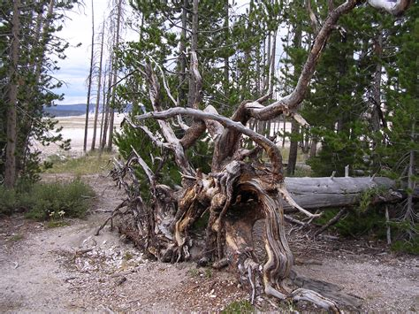 is like an uprooted tree find your middle ground