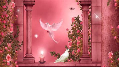 paradise love birds hd wallpapers rocks